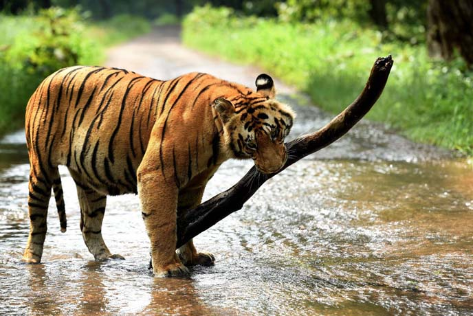 10 of the best zoos in India