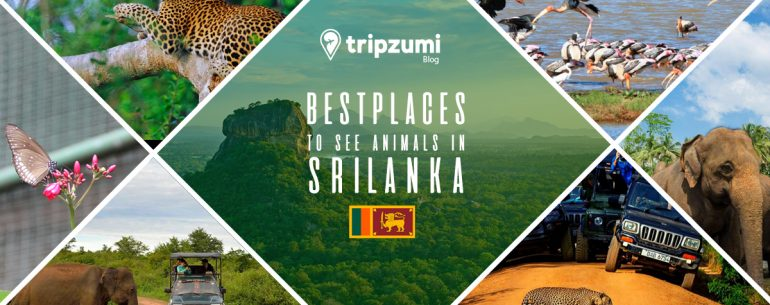 Best Places To See Animals In Sri Lanka