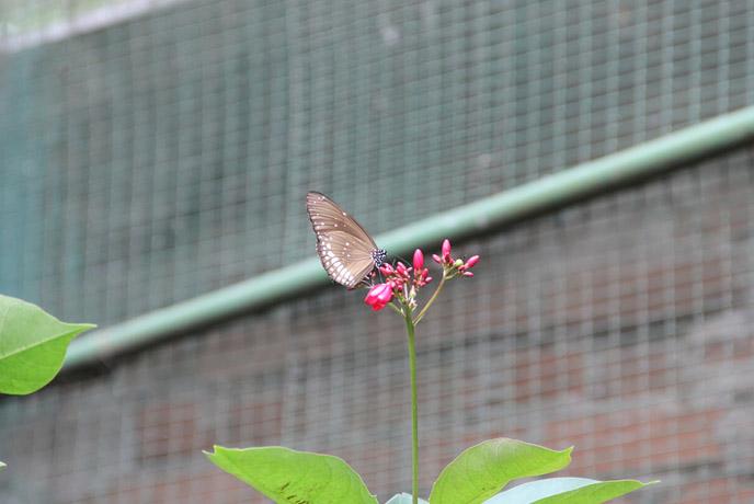 national zoological garden sri lanka